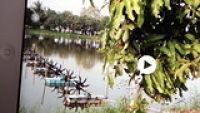ขายบ้านสวนเกษตรผสมมะม่วงและบ่อปลาเลี้ยงกุ้งด้วยขนาดใหญ่ 36 ไร่ ใกล้ศูนย์ศิลปชีพ อยุธยา และวัดเจดีย์หอย