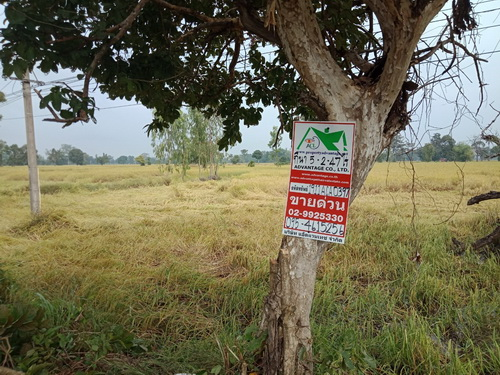 ที่ดินเปล่า 5-2-47 ไร่ หน้ากว้าง 94.53 เมตร ลึก 101.94 เมตร เหมาะสำหรับการทำการเกษตร