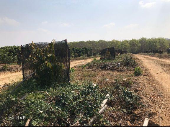 ที่ดินสวนทุเรียน 38-3-68ไร่ อ.สอยดาว จันทบุรี