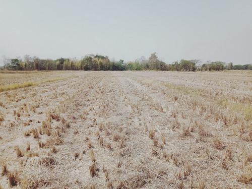 ขายที่ดิน 5 ไร่  ทำเลดี ราคาถูก  ต.แม่ใส อ.เมือง จ.พะเยา