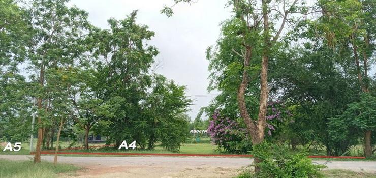 ที่ดินแบ่งแปลงย่อยขาย ตำบลรางบัว อำเภอจอมบึง จ.ราชบุรี