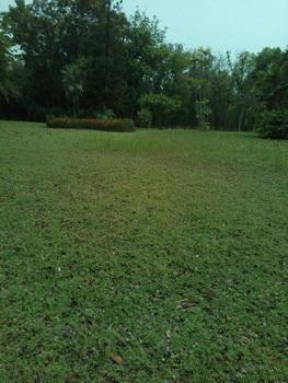 ขายที่ดินแปลงสวย พร้อมเรือนไม้และของสะสม จ.กาญจนบุรี