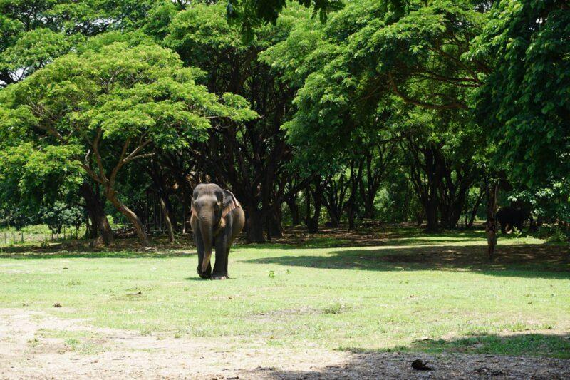 ขายปางช้างดอยอินทนนท์ 12 ไร่ 8 ล้าน(ไม่รับนายหน้า)
