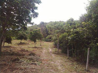 ที่ดินบนเนินเขาเตี้ย  เนื้อที่ดิน 2 ไร่ 1 งาน  33 ตารางวา  สวยมากๆ สำหรับใครที่ชอบปลูกบ้านเนินเขาเตี้ย ข้างๆไม่มีสิ่งปลูกสร้างเป็นป่าดิบชื้นตลอดทั้งปี