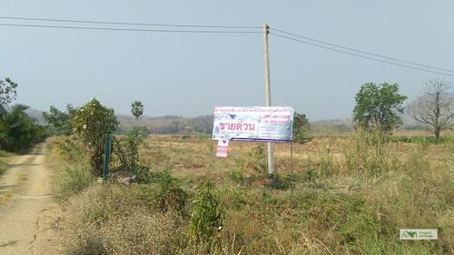 ขายที่ดินสวนมะพร้าวน้ำหอมกะทิ, มะละฮอนแลน ติดถนนหลัก เนื้อที่ 63 ไร่ อ.วิเชียรบุรี จ.เพชรบูรณ์