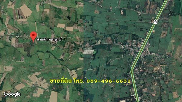 ขายที่ดินและต้นสัก (ขายรวมต้นสัก/แบ่งขายต้นสัก) 4 ไร่ 88 ตร.ว. อ.วิเชียรบุรี จ.เพชรบูรณ์