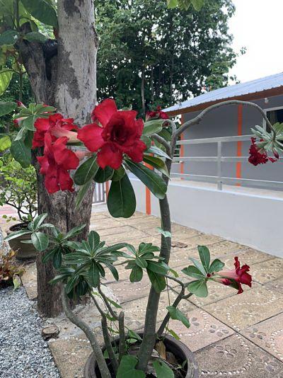 ขายบ้านใหม่พร้อมสวนปาล์มและสวนเกษตรผสม โฉนด 31 ไร่ วิวเนินเขาสวยมากๆ