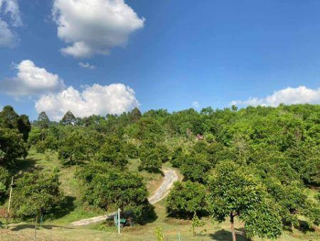 ขาย ที่ดิน สวนทุเรียน สวนมังคุด วิวภูเขา โอกาศทอง นานๆมีแบบนี้ 11 ไร่ 2 งาน 88 ตร.วา