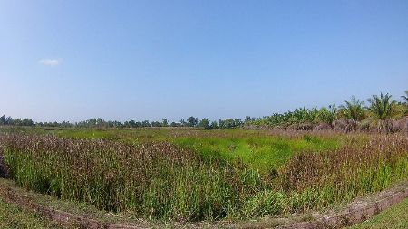 ขาย ที่ดิน เปล่า ราคาถูก ยกแปลง 6 แสนถ้วน 5 ไร่ 2 งาน 23 ตร.วา