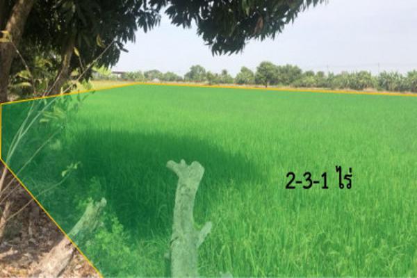 ขาย ที่ดิน ทับยาว ลาดกระบัง ถนนประชาอุทิศ 2 ไร่ 3 งาน 1 ตร.วา เหมาะสำหรับสร้างบ้านสวน ทำการเกษตร โคกหนองนา