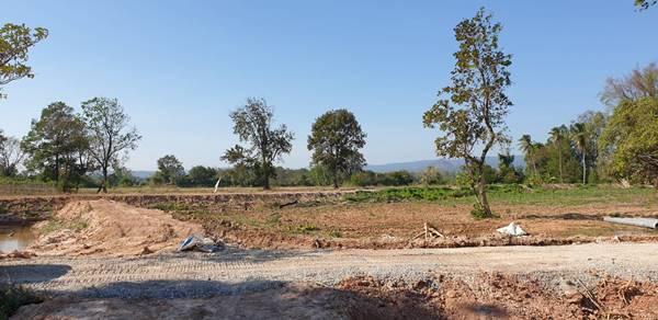ขายด่วนที่ดิน สวน อ.นาดี จ.ปราจีนบุรี เนื้อที่ 79 ไร่  สนใจติดต่อ 085 1350118