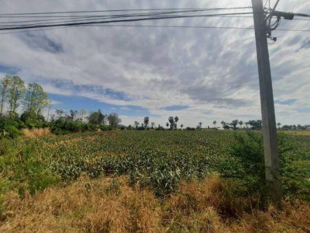 ขาย ที่ดิน ใกล้แหล่งชุมชน ติดลาดยาง2เลน 2 ไร่ สภาพโดยรวม ปลูกข้าวโพด เต็มพื้นที่ ครับ
