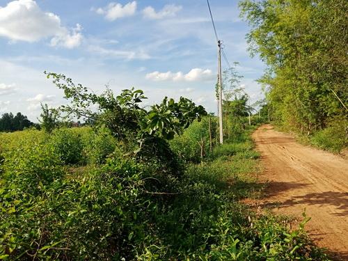 ขายที่ดินสวนยูคาลิปตัส  20-2-89 ไร่ อ.กุดรัง  จ.มหาสารคาม