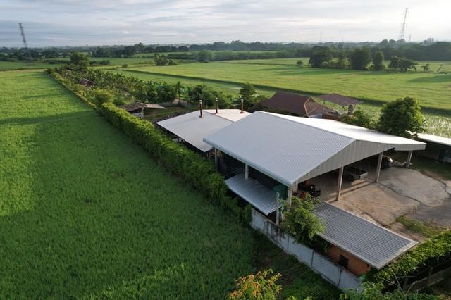 ขายทีดินพร้อมบ้านสวน 5ไร่ จังหวัด ลำพูน ขายบ้านสวน พร้อมโกดังเก็บสินค้าผลผลิตทางการเกษตร