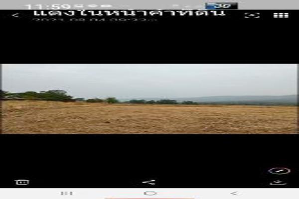 ขาย ที่ดิน ที่ดินพิษณุโลก ที่ดินพิษณุโลก7ไร่ 7 ไร่ ราคาถูกจนน่าตกใจ